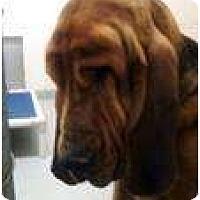 Adopt A Pet :: Harold - Carrollton, GA