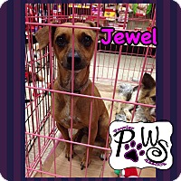 Adopt A Pet :: Jewel - Fowler, CA