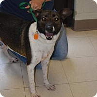 Adopt A Pet :: Rosa - Southaven, MS