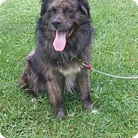 Adopt A Pet :: Kovu - Davison, MI