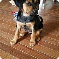Adopt A Pet :: Carmela - Marlton, NJ