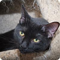 Adopt A Pet :: Lulu - Chicago, IL