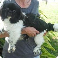 Adopt A Pet :: Buddy PLEASE DONATE - Orlando, FL