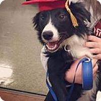 Adopt A Pet :: Chase - Lebanon, CT