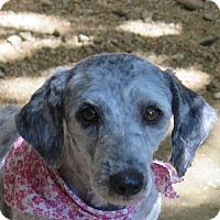 Adopt A Pet :: Fancy - San Antonio, TX
