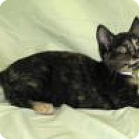 Adopt A Pet :: Primrose - Powell, OH