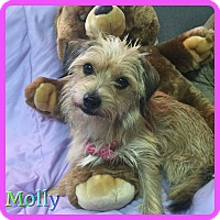 Adopt A Pet :: Molly - Hollywood, FL
