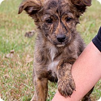 Adopt A Pet :: Tika~adopted! - Glastonbury, CT
