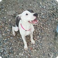 Adopt A Pet :: Amore - Apache Junction, AZ