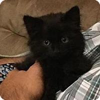 Adopt A Pet :: Tiana - Menifee, CA