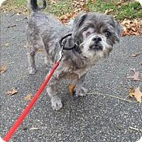Adopt A Pet :: STYLES - Dedham, MA