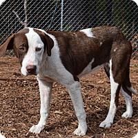 Adopt A Pet :: Macey - Minneapolis, MN