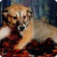 Adopt A Pet :: Nova - McKinney, TX