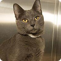 Adopt A Pet :: Buttons - Birmingham, AL