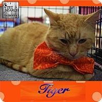 Adopt A Pet :: Tiger - Washington, PA