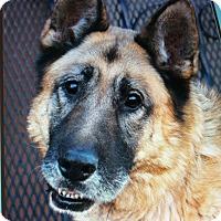 Adopt A Pet :: DINO VON DINSLAKEN - Los Angeles, CA