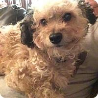 Adopt A Pet :: Pablo - Long Beach, CA