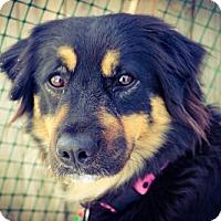 Adopt A Pet :: Harmony - Denver, CO