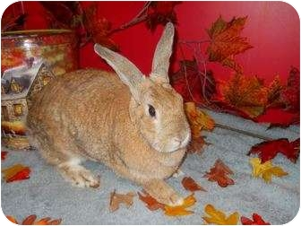Other/Unknown Mix for adoption in Roseville, California - Chrissy