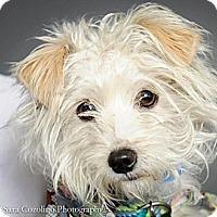Adopt A Pet :: Watson - Long Beach, CA