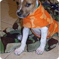 Adopt A Pet :: Reverse - Rowlett, TX