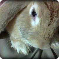 Adopt A Pet :: Precious - Williston, FL