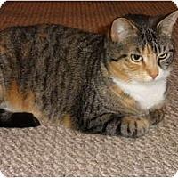 Adopt A Pet :: Ashley - Barnegat, NJ