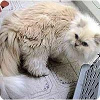 Adopt A Pet :: Garth & Sahsha - Davis, CA
