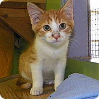 Adopt A Pet :: Hayes - Dover, OH