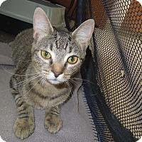 Adopt A Pet :: Emily - Medina, OH