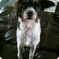 Adopt A Pet :: Pepper - Ocean Ridge, FL