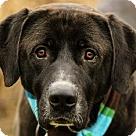 Adopt A Pet :: Donnor