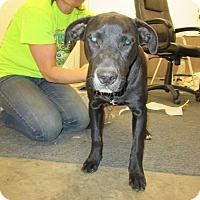 Adopt A Pet :: Blair - Houston, TX