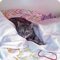 Adopt A Pet :: BW (declawed) - Walnut Creek, CA