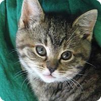 Adopt A Pet :: Boondock Bessie - Davis, CA