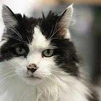 Adopt A Pet :: Ocean - Mebane, NC