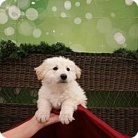 Adopt A Pet :: CHANDLER - Rancho Cucamonga, CA
