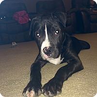 Adopt A Pet :: Snoopy - White Settlement, TX