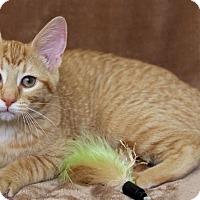 Adopt A Pet :: Henrietta - St Louis, MO