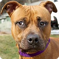 Adopt A Pet :: Asia - Framingham, MA