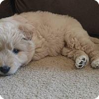 Adopt A Pet :: Flounder - Bedminster, NJ