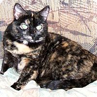 Adopt A Pet :: SUNSHADOWS - Acworth, GA