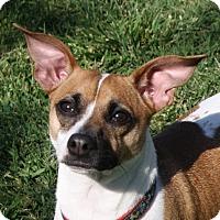 Adopt A Pet :: Val - Edmonton, AB