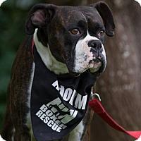 Adopt A Pet :: Lady 2 - Woodinville, WA