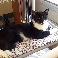 Adopt A Pet :: ozzie - Salem, OH