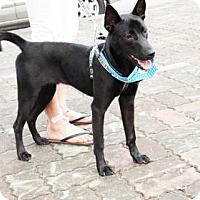 Adopt A Pet :: Han Bao - Vancouver, BC