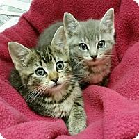 Adopt A Pet :: SUGAR & SPICE - Philadelphia, PA