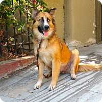 Adopt A Pet :: Mazarine - Los Angeles, CA