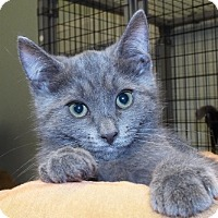 Adopt A Pet :: Joyce - Grants Pass, OR