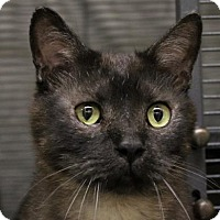 Adopt A Pet :: Sniper - West Des Moines, IA